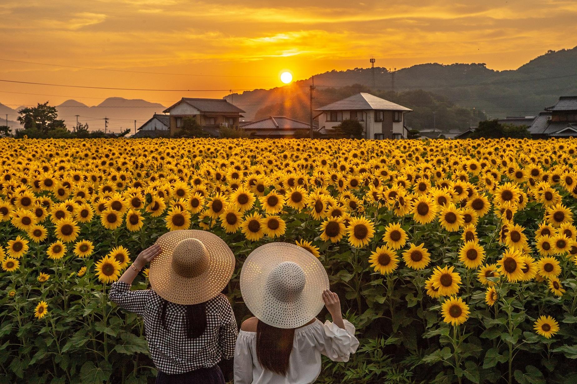H30大賞「太陽がいっぱい」岩田隆
