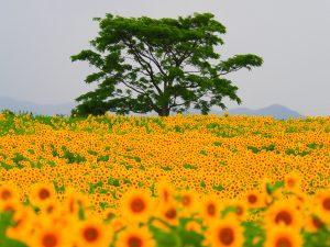 H30入選「花束に囲まれて」小泉秀城